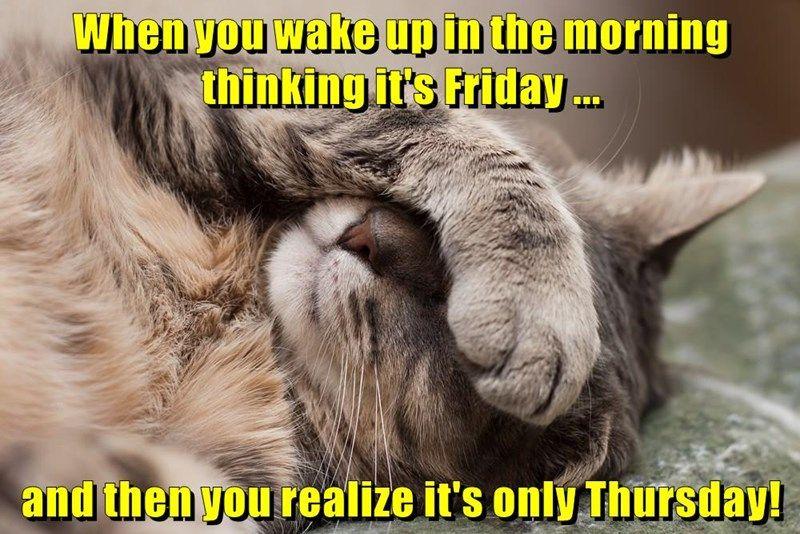 animals FRIDAY Thursday caption Cats