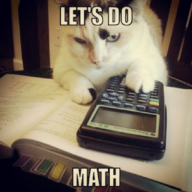 math joke funny humor cat kitty calculator