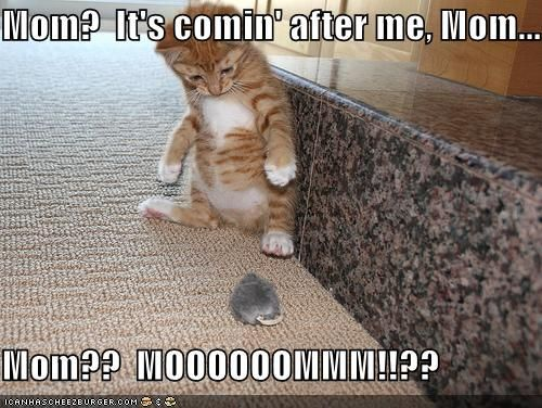 Really Funny Cats with Captions