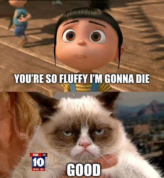 Watch the Beautiful Funny Gumpy Cat Memes