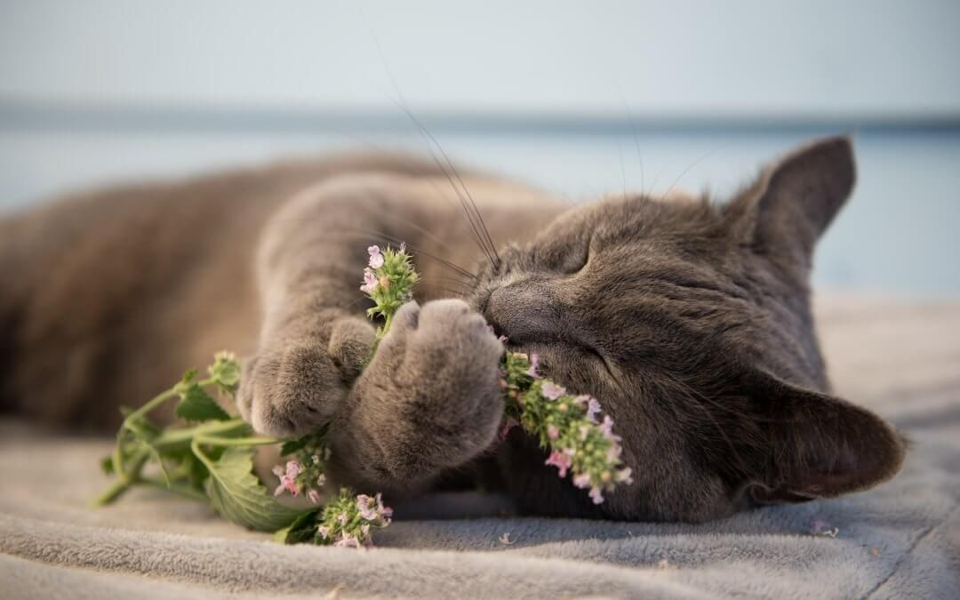 Catnip 20 Cool Things You Never Knew
