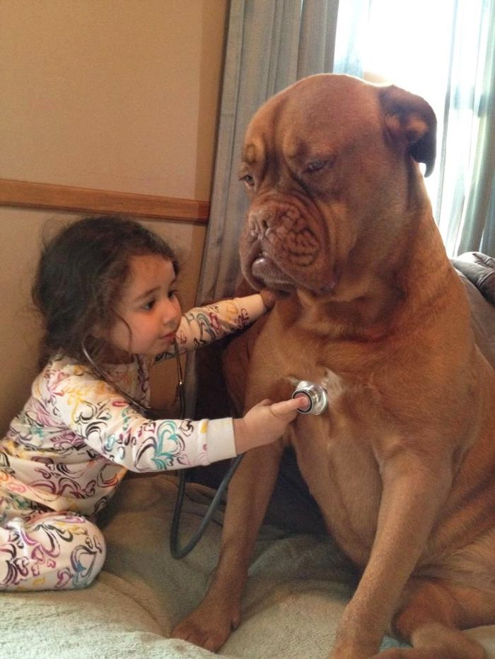 5 Little Girl Is Taking Care A Dog