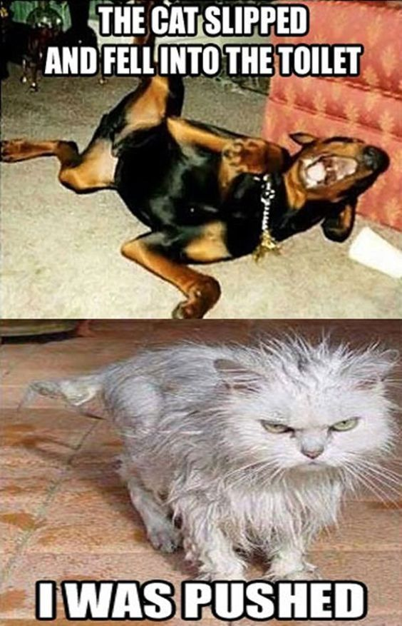funny memes dirty memes Cute Funny Animals Cute Cats Funniest Animals Cats