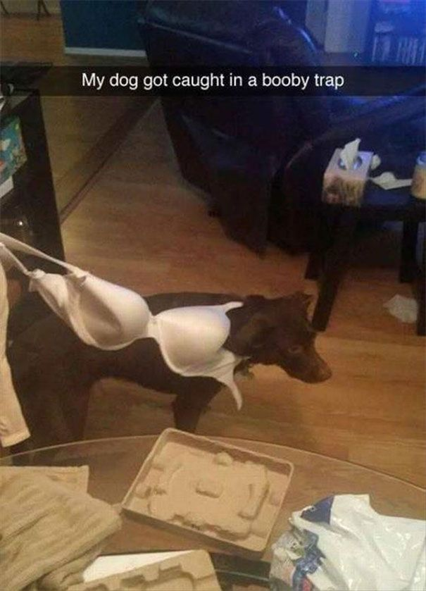 49 My Dog Got Caught In A Booby Trap