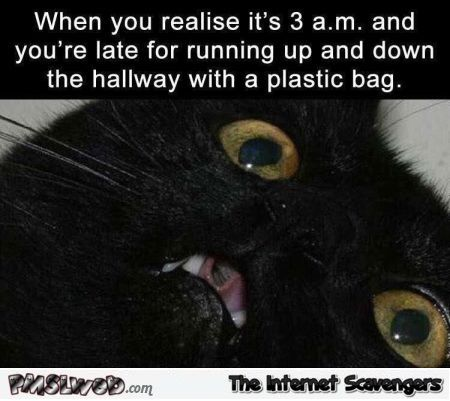 When you re late for running up and down the hallway funny cat meme
