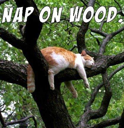 nap on wood cat meme
