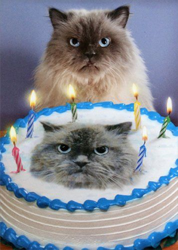 Watch the Best Of Funny Cat Pictures Cake