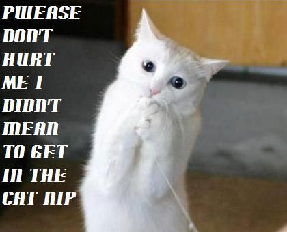 Little funny cat on your puter keyboard image