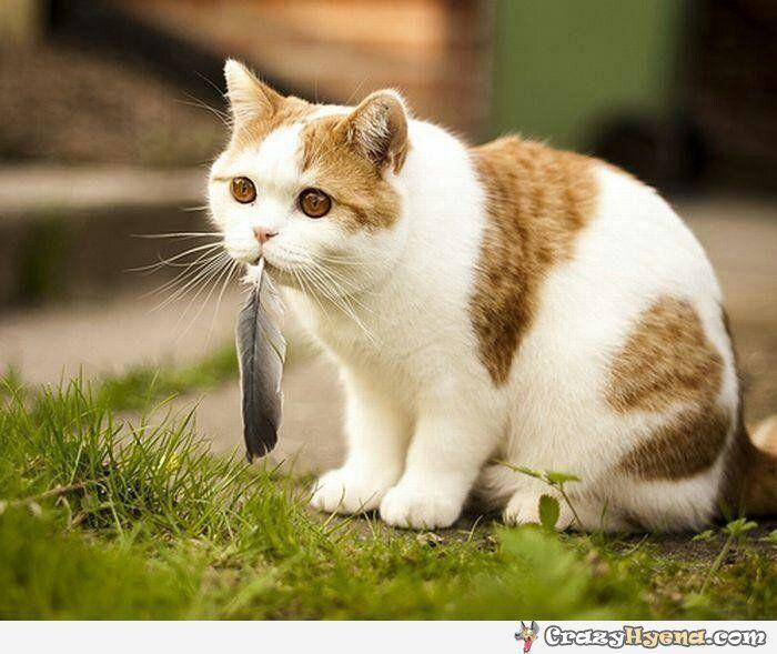 cat ate bird picture