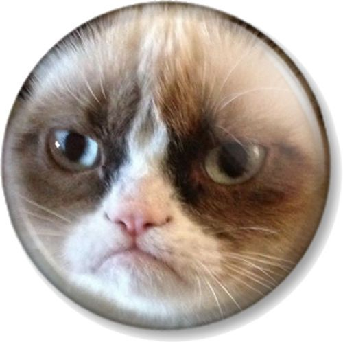 "Grumpy Cat Face 25mm 1"" Pin Button Badge Internet Meme Funny Pet Humour Close up for sale online"