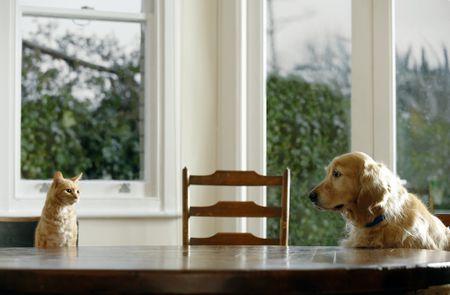 catVdog JanieAirey Getty 56a26a1c3df78cf f