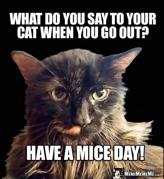 Cat Question of the Day What do you say to your cat when you go