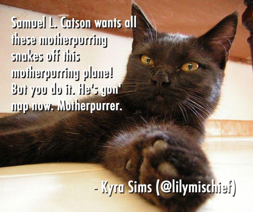 edians Caption Cat s