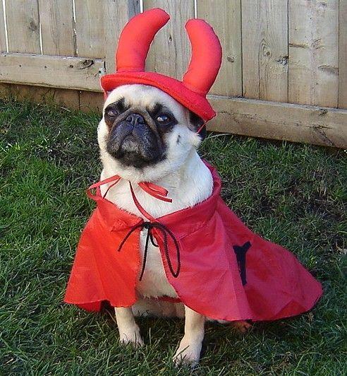 Halloween Pug Devil Costume