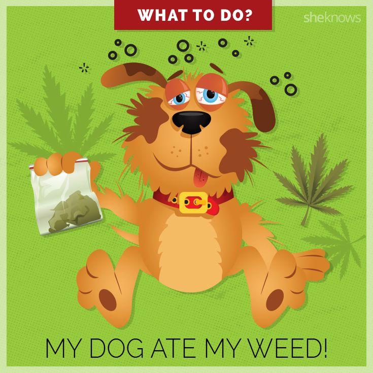 My dog ate my weed