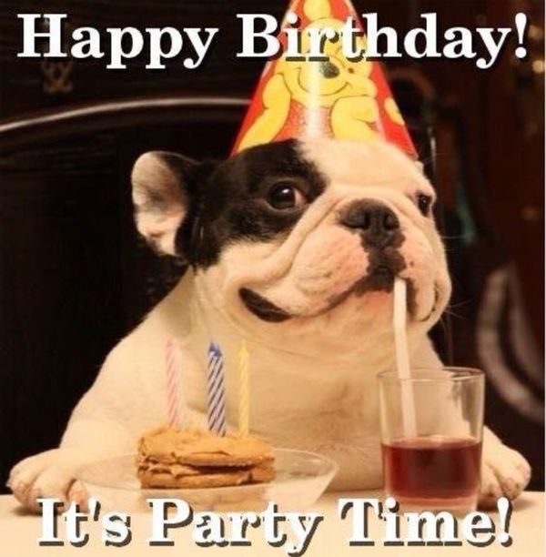 Watch the Elegant Funny Happy Birthday Animal Pictures