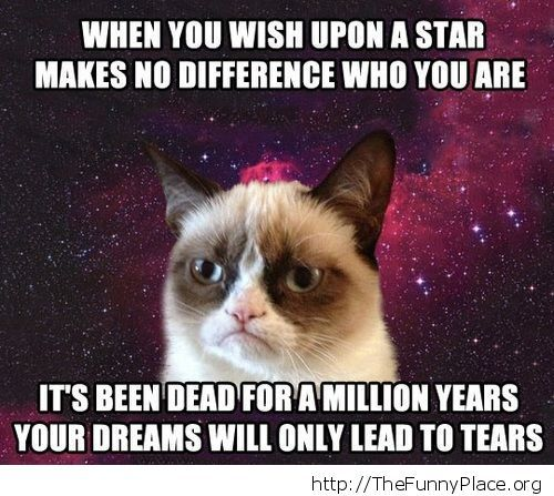 Demotivatinal Grumpy Cat