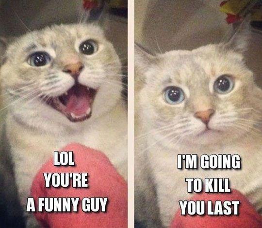 cool cat killing guy human1