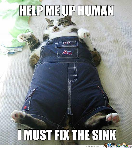 Fat Cat Plumber