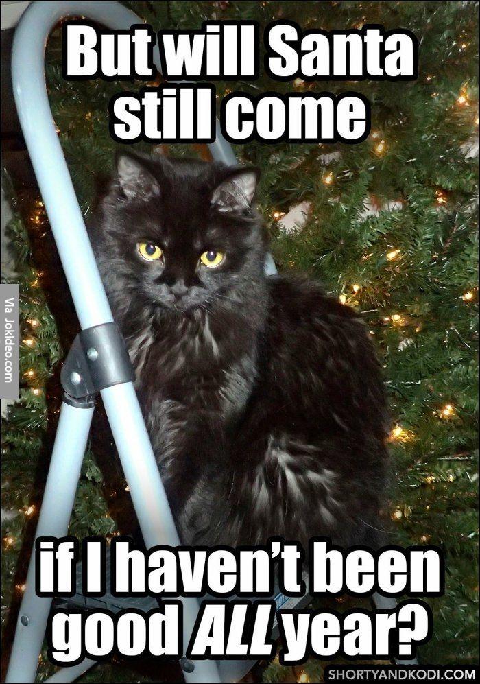 Will santa still e cat christmas meme