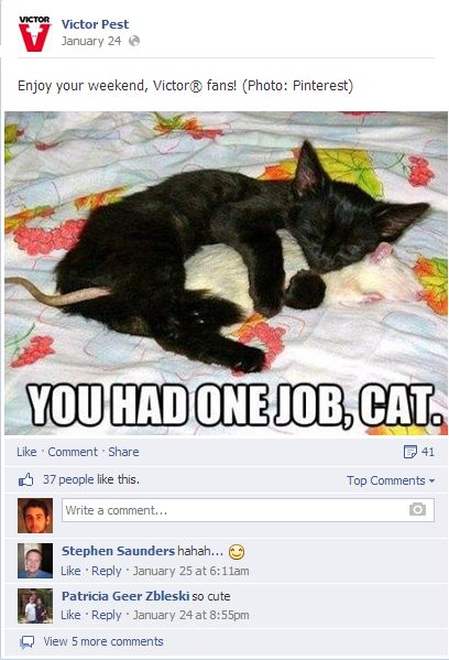 funny cat This was found on the Victor Pest page and shows how a business doesn t have to shove their products down their followers throat