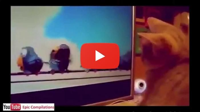 Are These Birds Real Funny Cats Videos