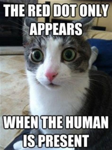 Funny cat pictures 224x300 Funny sniper laser cat meme