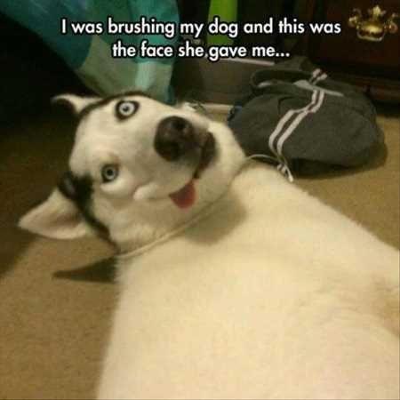 33 Most Adorable Animals Evercute Animal Memes Funny