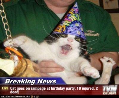 breaking news cat memes birthday cat rampage funny cats evil cat tv news kitties cats psycho funny memes