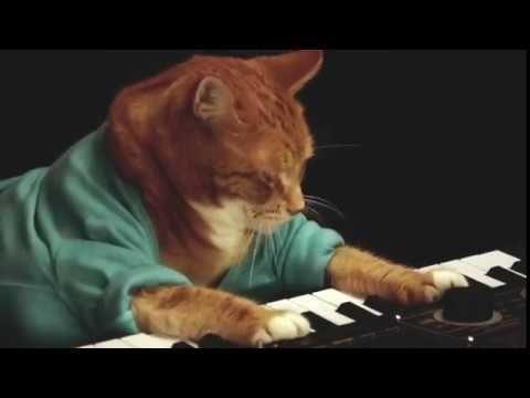 Keyboard Cat Bento A Tribute