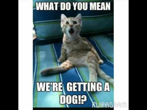 funny cats and dogs memes