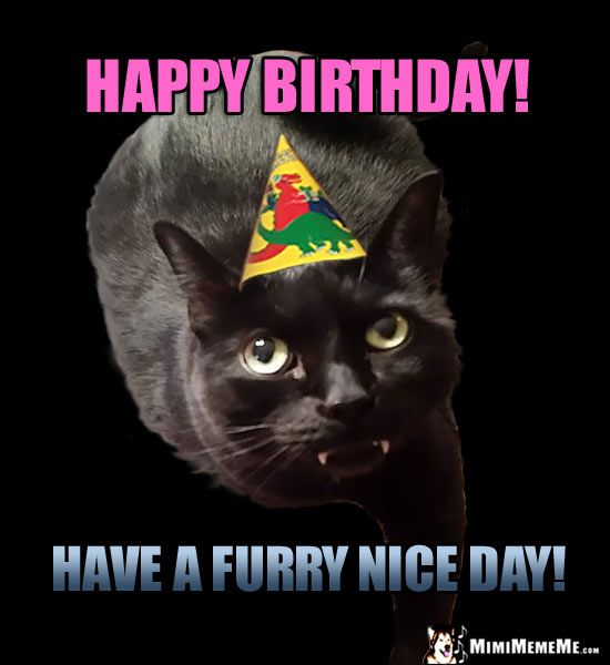 Cat in Party Hat Says Happy Birthday Have a furry nice day