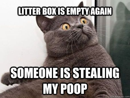 Litter box is empty again someone is stealing my poop