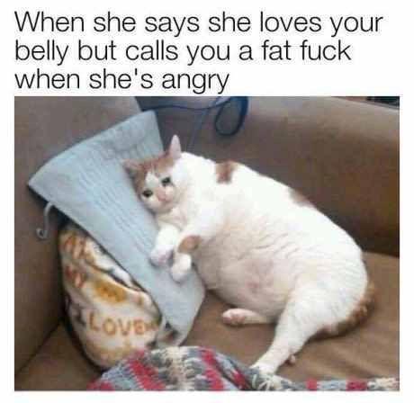 Pin By Waihuamalai Makahilahila Funny Cute Animalsfat Cat Meme 126 Best Fat