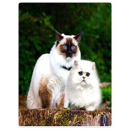 """Blankets Soft Warm Sofa Bed Throw Blanket Funny White Cats Animal Persian Cat 60"""" x 80"""" Amazon Kitchen & Home"""