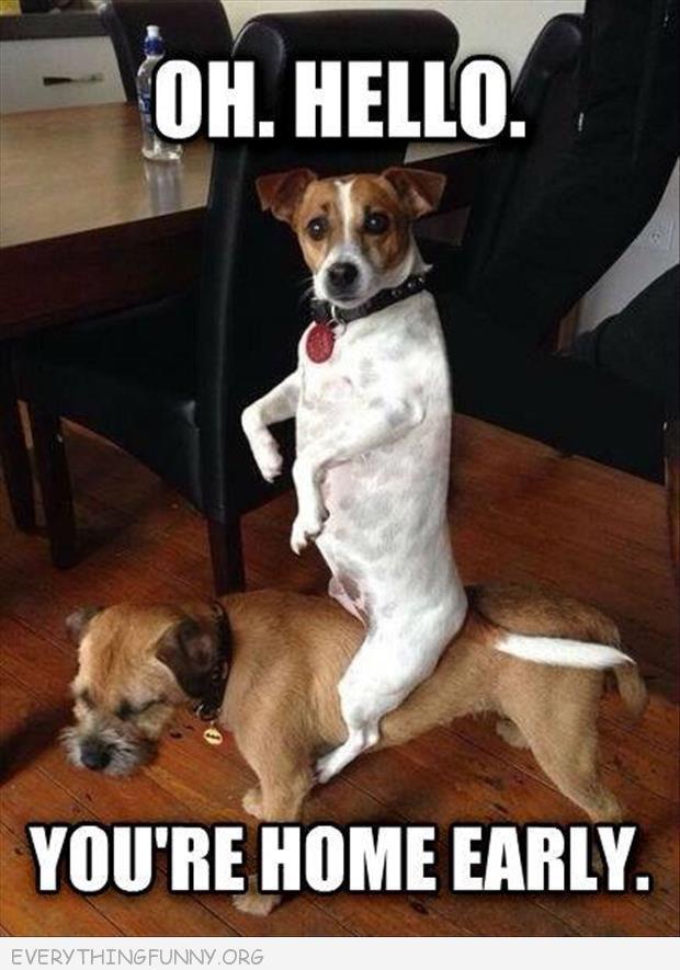Funny Animals Pinterest