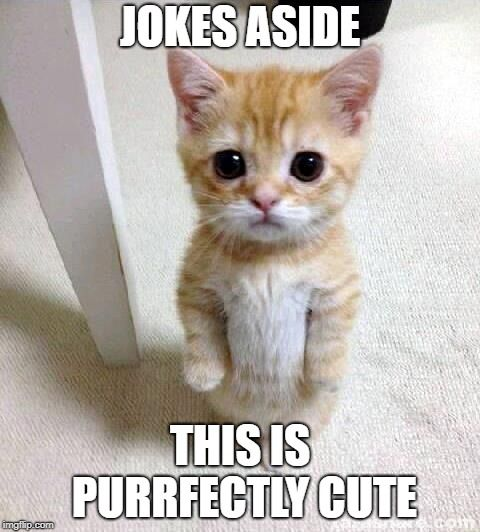 Cute Cat Meme JOKES ASIDE THIS IS PURRFECTLY CUTE