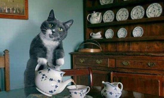 Tea Party Funny Cat