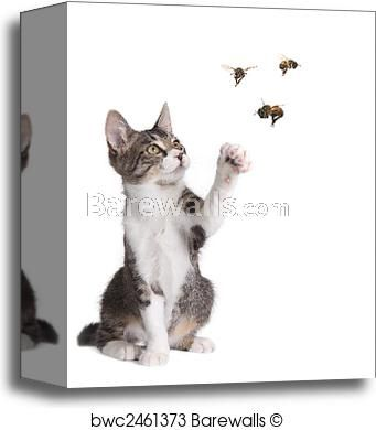 Funny Cat Catching Bees Canvas Print