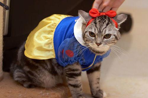 Snow White Cat Costume