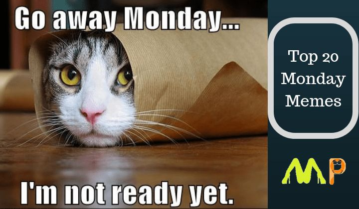 Watch the Incredible Funny Cat Pictures with Captions Monday