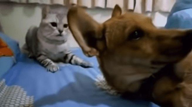 dog farts cat eback