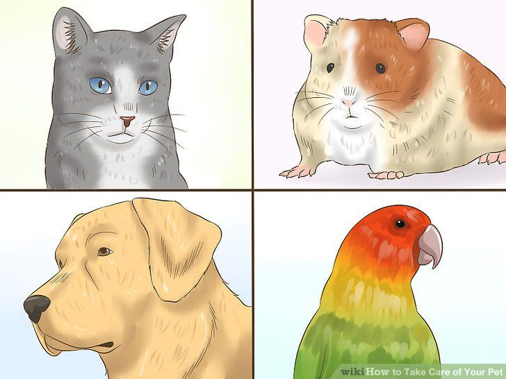 Image titled Take Care of Your Pet Step 2