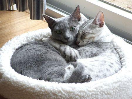 Cute Cat Friends