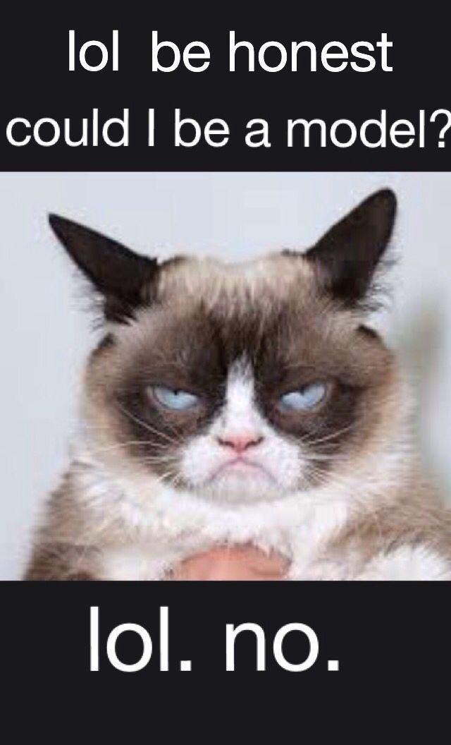 Cut Cat Cymric Sad Faces Grumpy Cat All About Cats Cat