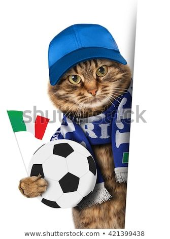 Funny cat with soccer ball on white background Football scarf of Italy White space