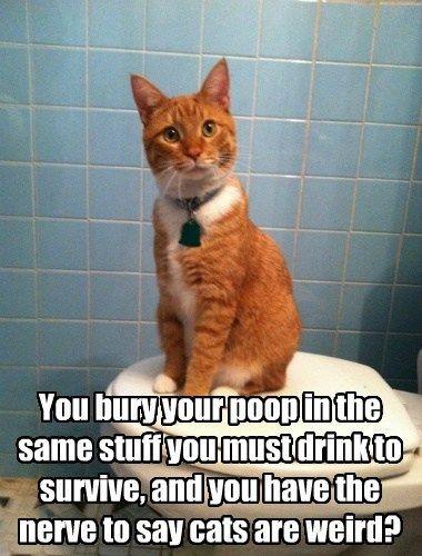 litterbox bathroom humor toilet funny weird