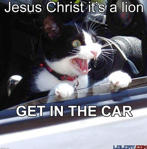 inthecar funny cats we all love them