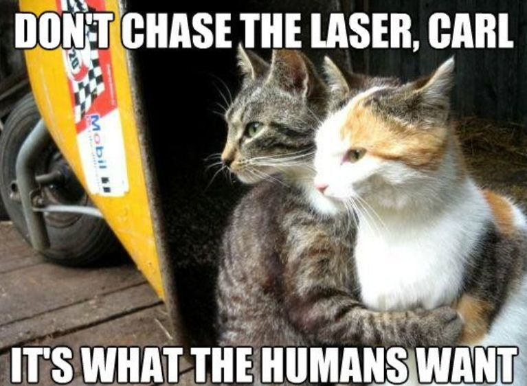 Wise Cats