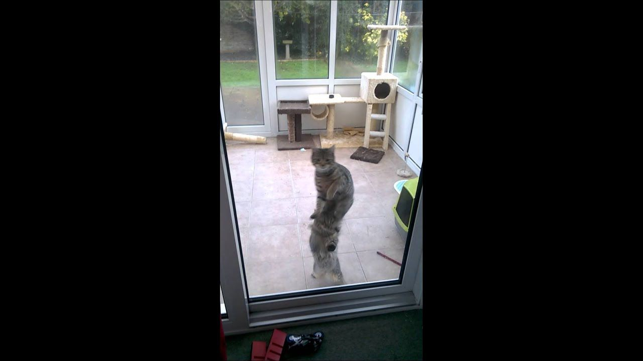 House Pain Jump Around Cat Remix Top Rated Funny